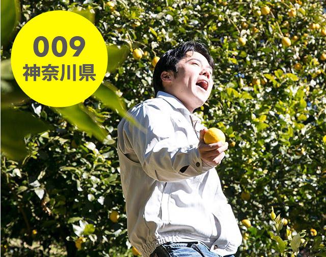 神奈川県:自然園いしわた農場