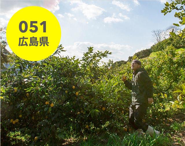 広島県:セーフティーフルーツ