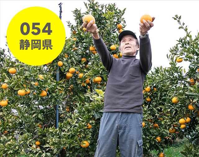 静岡県:外山農園