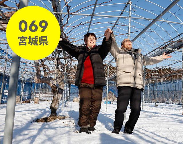 宮城県:後藤ぶどう園